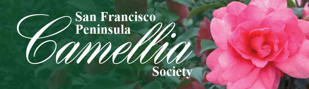 San Francisco Peninsula Camellia Society